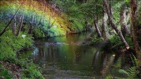 Riacho encantado com um córrego lento em uma floresta profunda video estoque