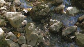 riacho que flui sobre as rochas video estoque