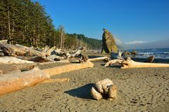 Rialto Beach With Drift Wood Stock Images