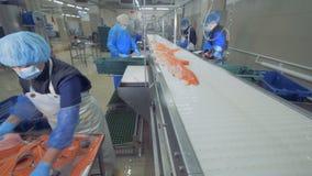 Riassegnazione dei tronchi del pesce fresco sulla cinghia stock footage