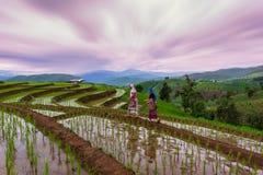 Ribals sul terrazzo del riso a Chiang Mai fotografie stock
