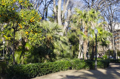 Ribalta gardens, Castellón. Park dedicated to the well-known painter Ribalta, with abundant trees, gardens and diverse species of plants, in the center Royalty Free Stock Photography