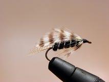 ribbed svart fluga Royaltyfri Fotografi