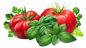 Ribbed tomatoes with herbs, paths. Fresh ribbed tomatoes with Genovese basil and herbs.Clipping paths, shadows separated, infinite depth of field. Design Stock Photos