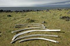 Ribben van walvis bij de kust van IJsland. stock fotografie