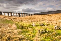 Ribblehead铁路桥 免版税图库摄影