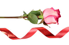 Ribbon And Roses Royalty Free Stock Photography