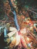 Ribbon and lights