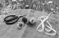 Ribbon and scissors with freshly cut cornflowers on hessian. Ribbon and scissors lie with freshly cut cornflowers on hessian in a summer flower garden royalty free stock photos
