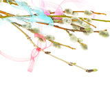 Ribbon and spring pussy willow twigs Royalty Free Stock Photography