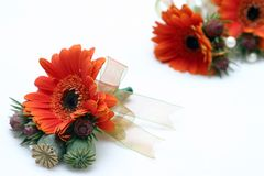 Ribboned orange buttonholes Stock Images