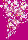 Ribbons blossom explode pink Royalty Free Stock Image