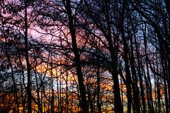 Ribbons of Sky Colors Peek through the Trees. I live four miles from Lake Michigan, and the lake creates many interesting skies. I looked out of my window stock photo