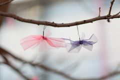 Ribbons in a Tree Royalty Free Stock Photos