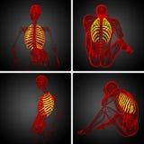 ribcage Imagem de Stock Royalty Free