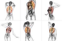 ribcage Fotografia de Stock