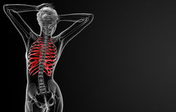 Ribcage bone Stock Photos