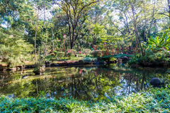 Ribeirão Preto市动物园的法比奥Barreto日本庭院 圣地 免版税图库摄影