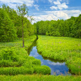 Ribeiro e prado e floresta. Fotos de Stock Royalty Free
