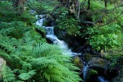 Ribeiro na floresta Fotografia de Stock Royalty Free