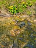Ribeiro selvagem da montanha na mola adiantada Foto de Stock