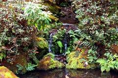 Ribeiro tropical calmo Fotos de Stock Royalty Free