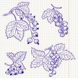 Ribes royalty illustrazione gratis