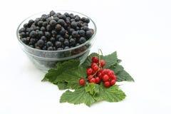 Ribes. fotografia stock