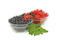 Ribes. Immagine Stock