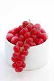 Ribes. Red ribes on the white background Royalty Free Stock Images