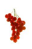 Ribes Immagine Stock