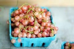 Ribes bianco Immagini Stock Libere da Diritti
