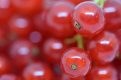 Ribes. Close and macro view on delicious fresh Ribes that are made in organic agriculture Royalty Free Stock Photo