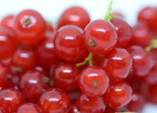 Ribes. Close and macro view on delicious fresh Ribes that are made in organic agriculture Royalty Free Stock Images