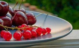 Ribes e ciliegia Su un vassoio naughty Fotografia Stock Libera da Diritti