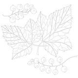 Ribes e foglie royalty illustrazione gratis