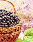 Ribes nero Immagini Stock Libere da Diritti