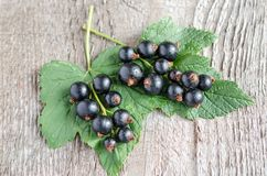 Ribes nero Fotografia Stock