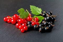 Ribes nero e, fine su Fotografie Stock