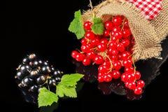 Ribes nero e, fine su Immagini Stock