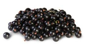 Ribes nero fresco rotante Fotografie Stock Libere da Diritti