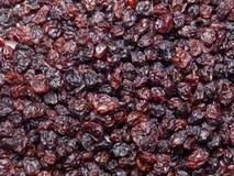 Ribes nero secco Fotografia Stock Libera da Diritti