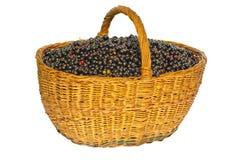 Ribes nero in un cestino Fotografia Stock