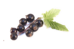 Ribes nigrum isolated. Ribes nigrum, black currant, isolated on white background Royalty Free Stock Photo