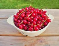 Ribes riped rosso raccolto Fotografie Stock Libere da Diritti