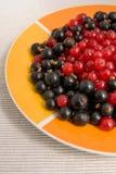 Ribes rossi e neri Immagine Stock