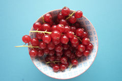 Ribes rosso Immagine Stock
