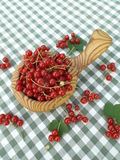 Ribes rosso Fotografie Stock