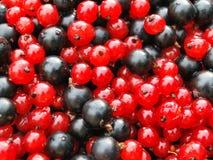 Ribes rosso e nero fotografia stock