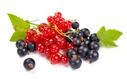 Ribes rosso e nero Immagine Stock